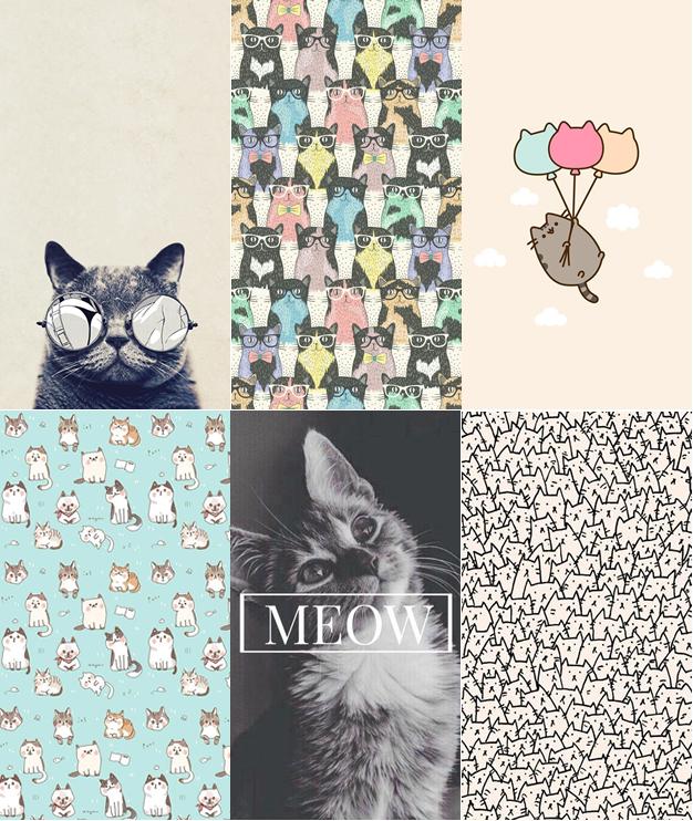 wallpaper fofos para celular de Gatinhos