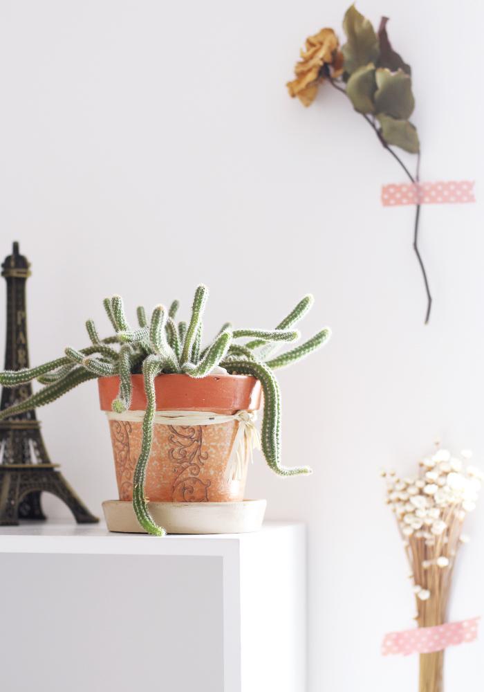 Decoração com Cactos e plantas secas