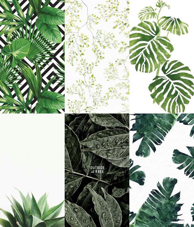Wallpaper folhas plantas para celular