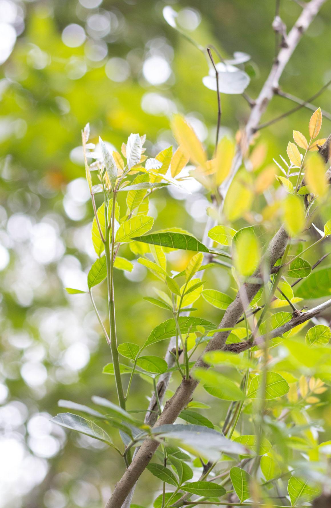 Forest Setembro Amarelo