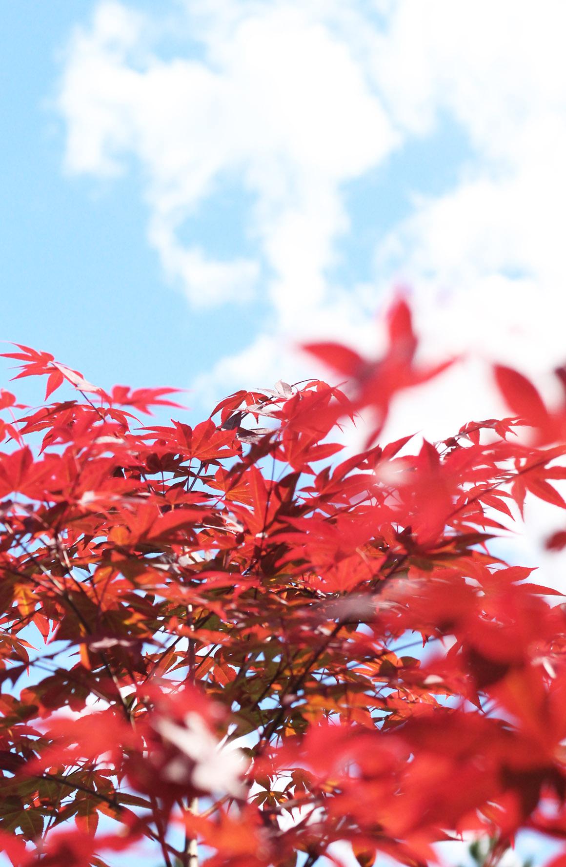 Outono Colorindo Nuvens