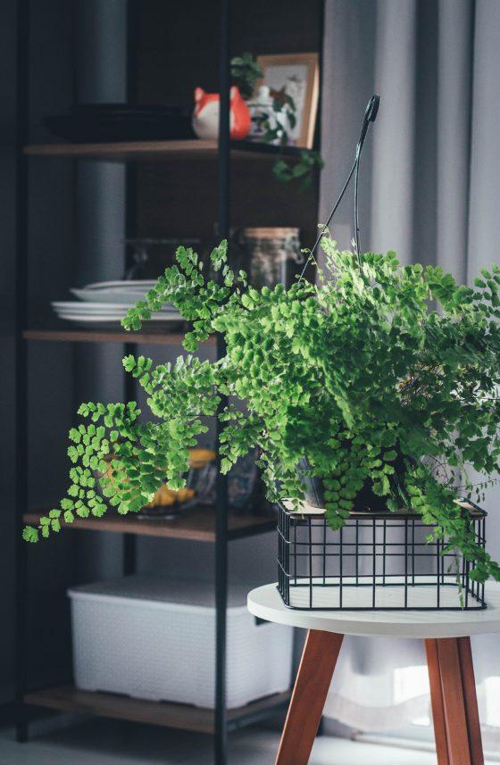 Plantas de Interiores Avenca em apartamento Colorindo Nuvens